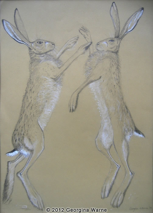 Drawing of Boxing Hares