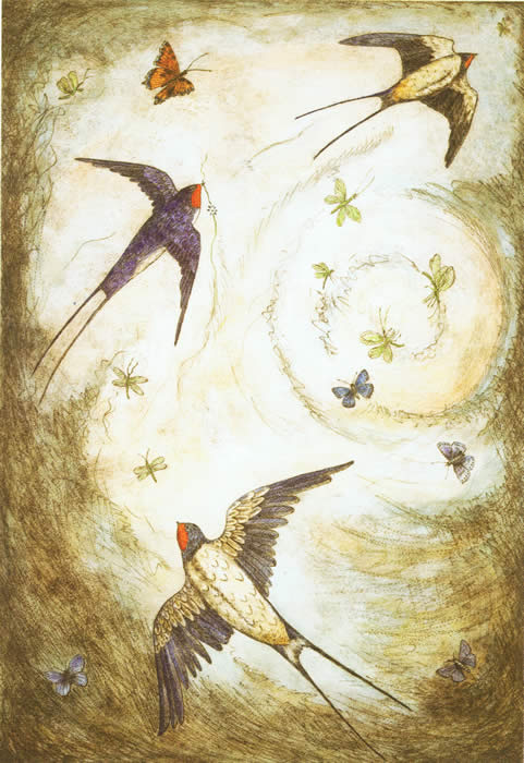 A Swallows Summer drypoint
